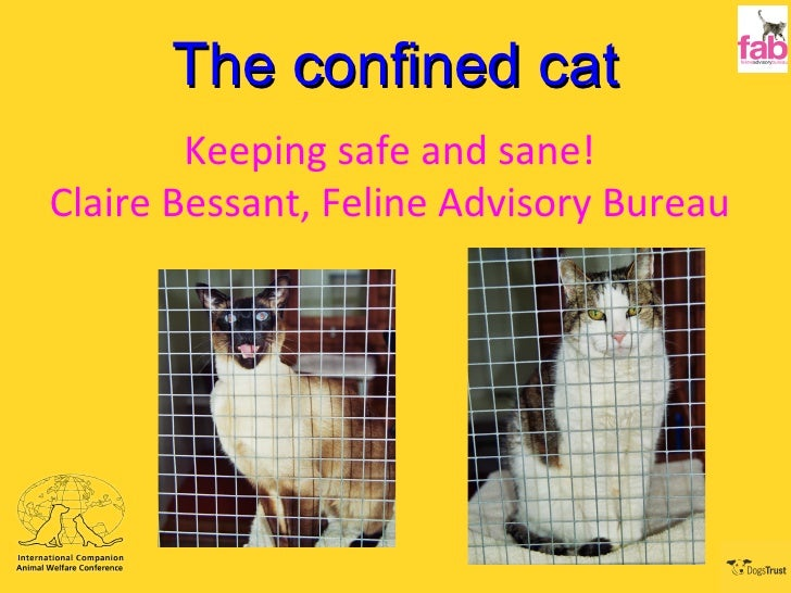 The confined cat Keeping safe and sane! Claire Bessant, Feline Advisory Bureau