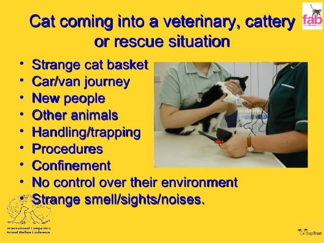Cat coming into a veterinary, catteryCat coming into a veterinary, cattery or rescue situationor rescue situation • Strang...