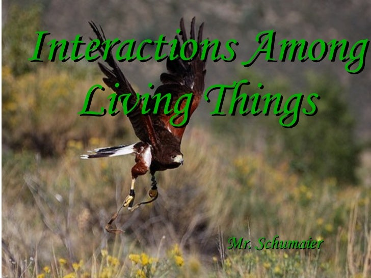 Interactions Among Living Things Mr. Schumaier