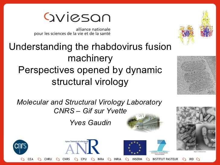 Understanding the rhabdovirus fusion machinery Perspectives opened by dynamic structural virology Molecular and Structural...