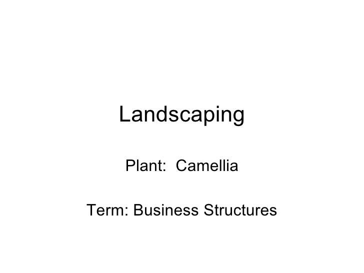 Landscaping Plant:  Camellia Term: Business Structures