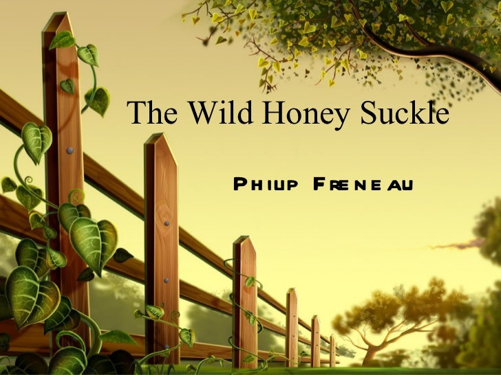 the wild honeysuckle