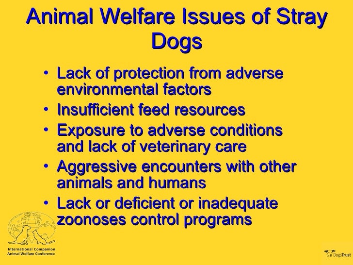 welfare concerns on pedigree dogs Health and welfare problems in pedigree dogs can arise as a result of the  deliberate selection for exaggerated physical features or as a result of inherited.