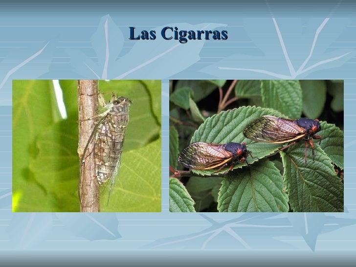Las Cigarras