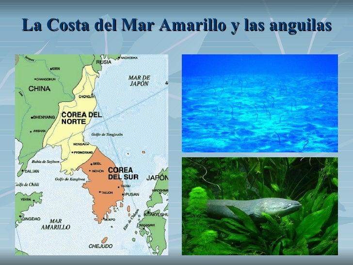 La Costa del Mar Amarillo y las anguilas