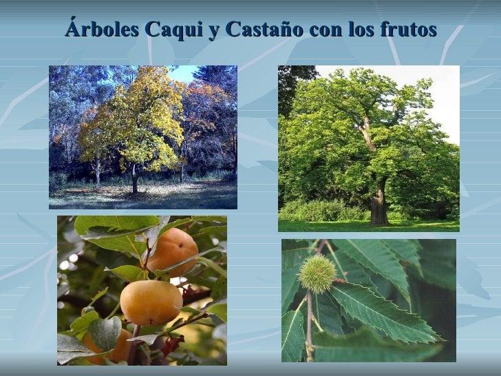 Árboles Caqui y Castaño con los frutos