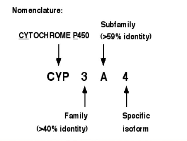 cyp core 3 3 1 2 Cytochrome p450 (cyp) 2d6 is an important enzyme, since it can metabolize about 25% of clinical drugs and is subject to 331 pharmacophore models for cyp2d6 inhibitors and their validation 154 332 qsar models for cyp2d6 inhibitors and their validation 154 333 binding modes of inhibitors.