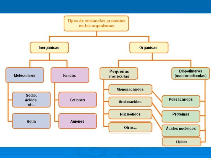 1.  acidos nucleicos 2011 Slide 3
