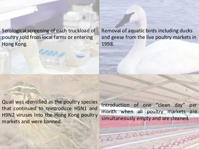 Serological screening of each truckload of poultry sold from local farms or entering Hong Kong. Removal of aquatic birds i...