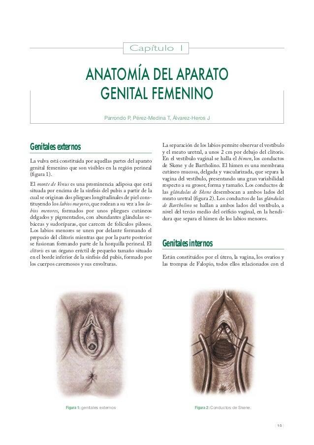 1 anatomia del-aparto_genital_femenino