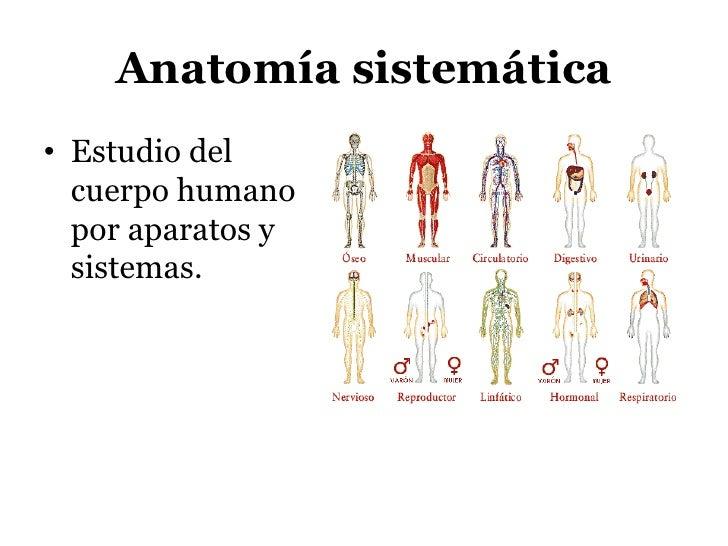 1. anatomia facial