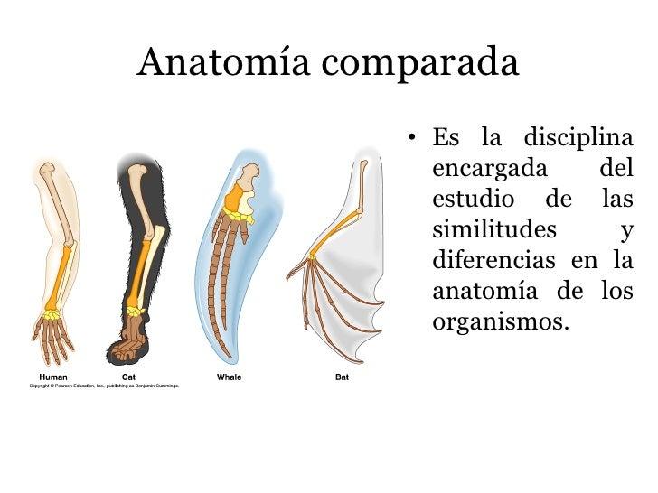 Dorable Definición De La Anatomía Comparada Molde - Anatomía de Las ...