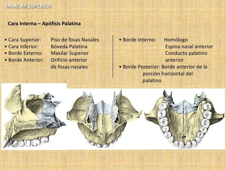 1. anatomia humana v2.8