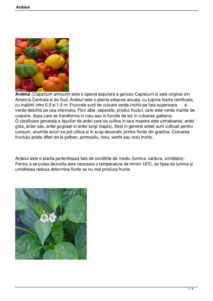 ArdeiulArdeiul (Capsicum annuum) este o specie populara a genului Capiscum si este originar dinAmercia Centrala si de Sud....