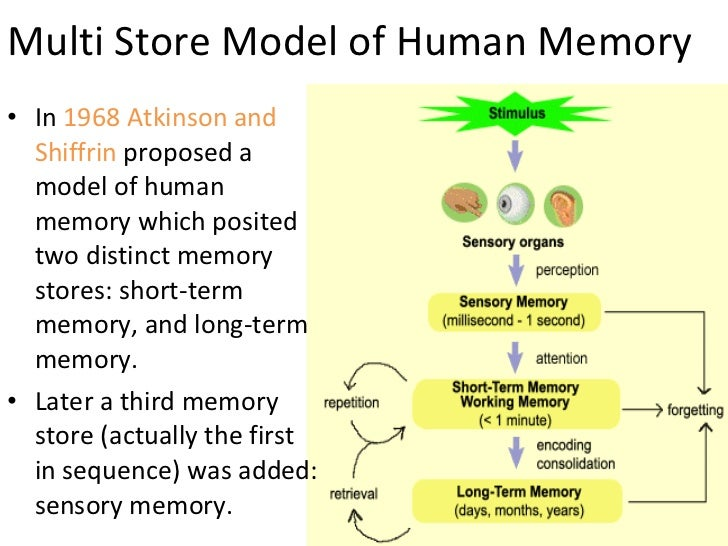 multistore model Atkinson and shiffrin (1968) developed the multi-store model of memory (msm),  which describes flow between three permanent storage systems of memory:.