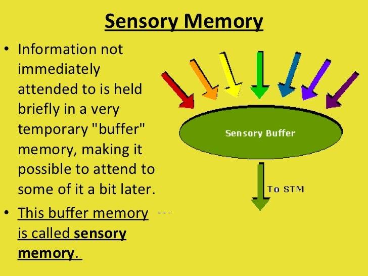 sensory memory model Wwwpsychpurdueedu.