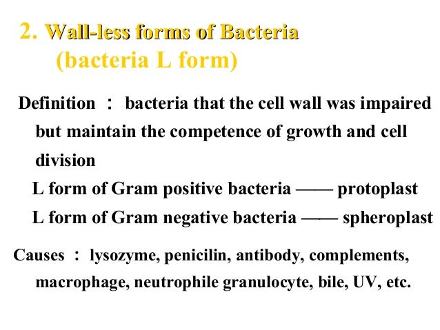1 basic characters of bacteria