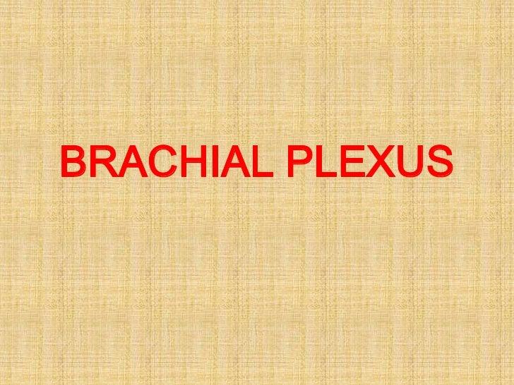 BRACHIAL PLEXUS<br />