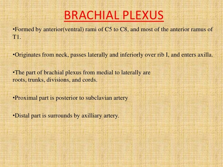 1. brachial plexus & its applied anatomy[1]