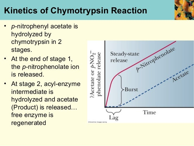 kinetics of chymotrypsin Specificity and kinetics α-chymotrypsin from bovine pancreas selectively catalyzes the hydrolysis of peptide bonds on the c-terminal side of tyrosine, phenylalanine, tryptophan, and leucine.