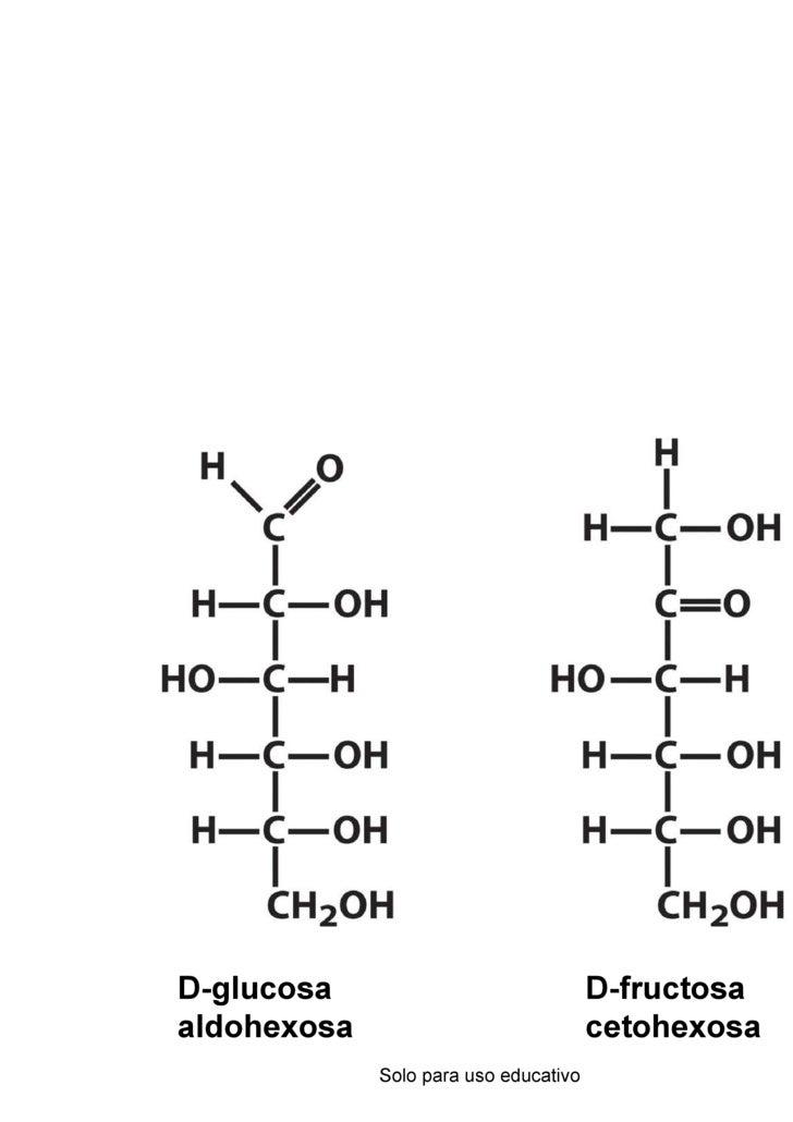 1.Carbohidratos 20091