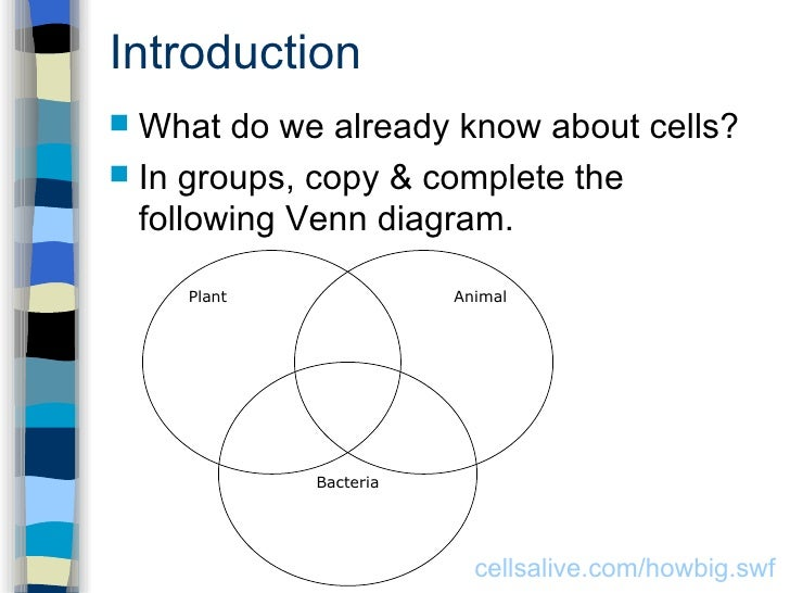 Bacteria Plant And Animal Venn Diagram Diagram