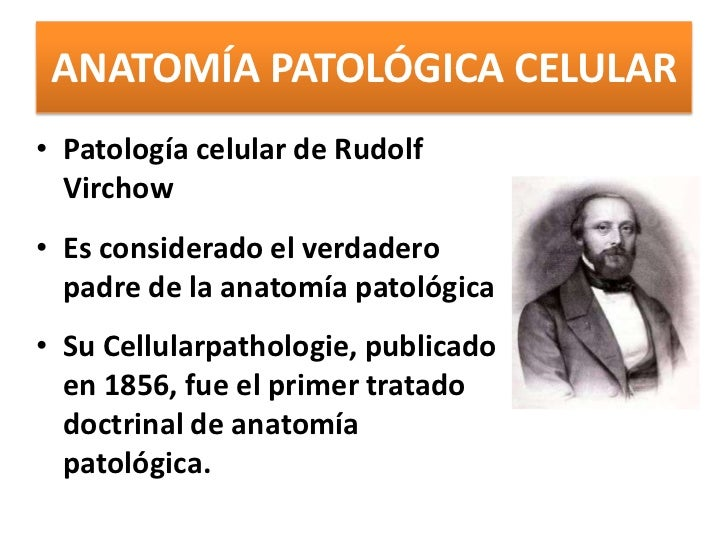 Lujoso Definición Anatomía Celular Foto - Anatomía de Las ...