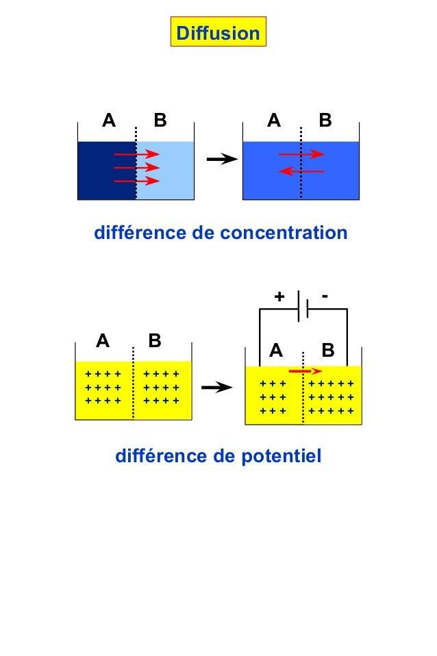 différence de concentrationA B A Bdifférence de potentiel-+A B+ + + ++ + + ++ + + ++ + + ++ + + ++ + + +A B+ + ++ + ++ + +...