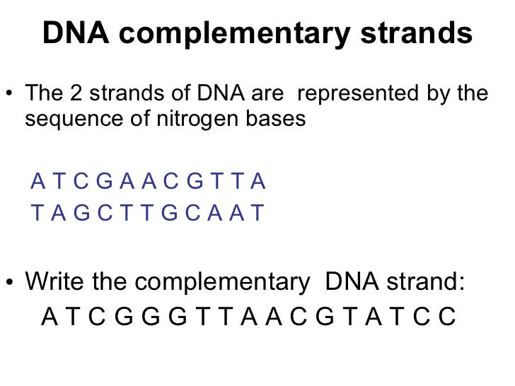 how to draw a dna strand