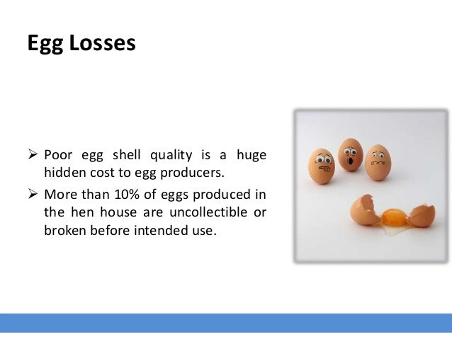 Egg Losses  Poor egg shell quality is a huge hidden cost to egg producers.  More than 10% of eggs produced in the hen ho...