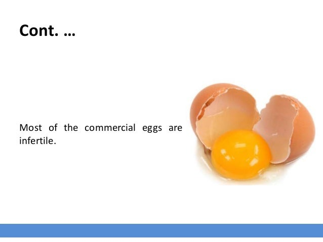 Cont. … Most of the commercial eggs are infertile.