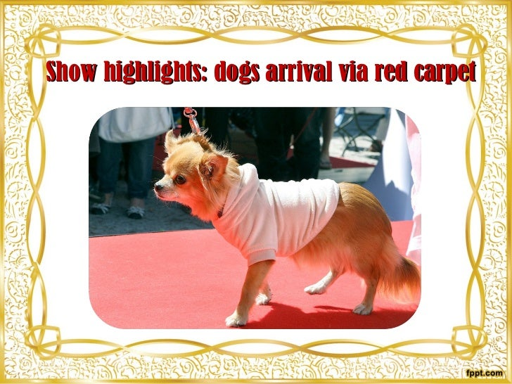 Show highlights: dogs arrival via red carpet