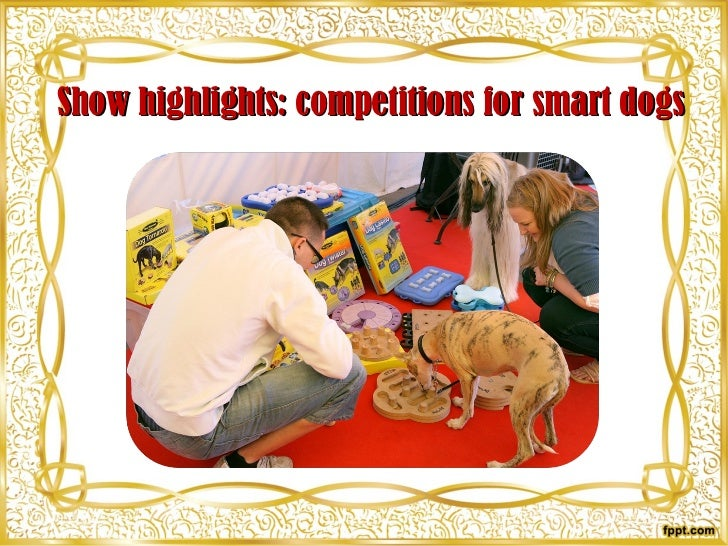 Show highlights: competitions for smart dogs