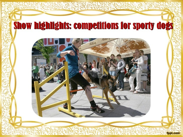 Show highlights: competitions for sporty dogs