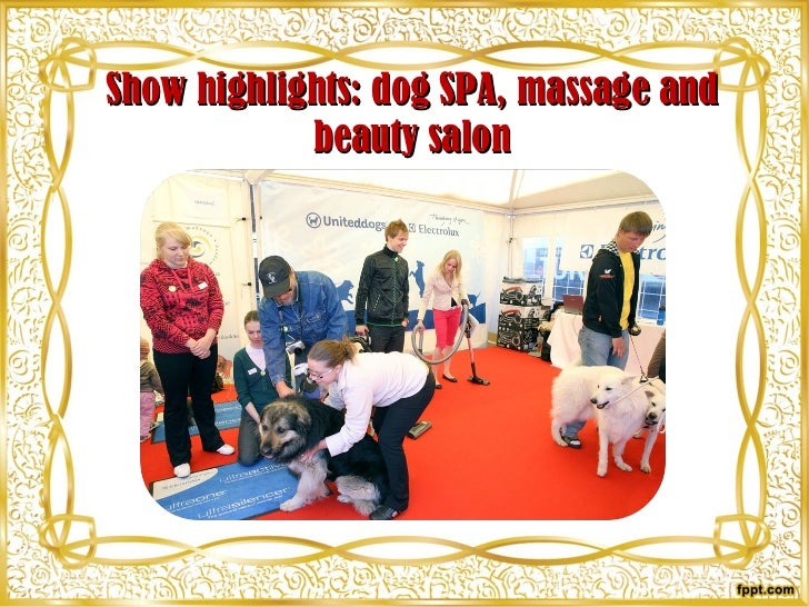 Show highlights: dog SPA, massage and beauty salon