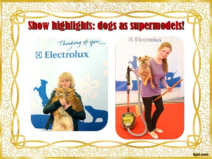 Show highlights: dogs as supermodels!