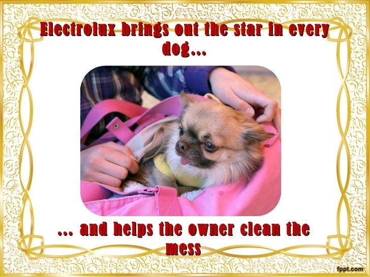 Electrolux brings out the star in every dog… <ul><li>…  and helps the owner clean the mess </li></ul>