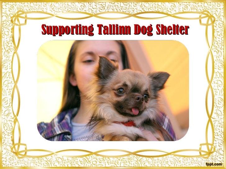 Supporting Tallinn Dog Shelter