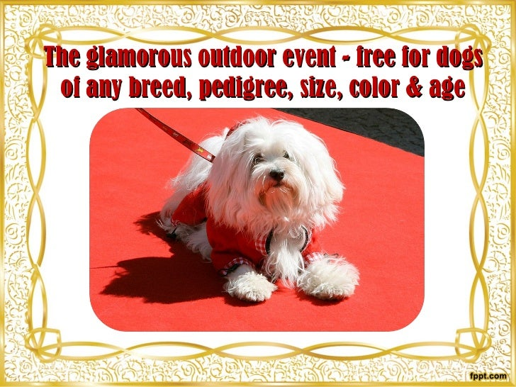 The glamorous outdoor event  - free  for dogs of any breed ,   pedigree,  size , color & age