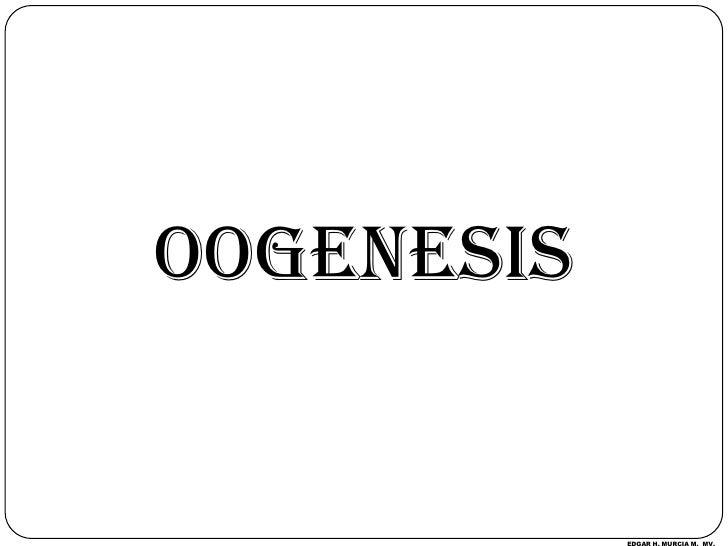 OOGENESIS<br />EDGAR H. MURCIA M.  MV.<br />