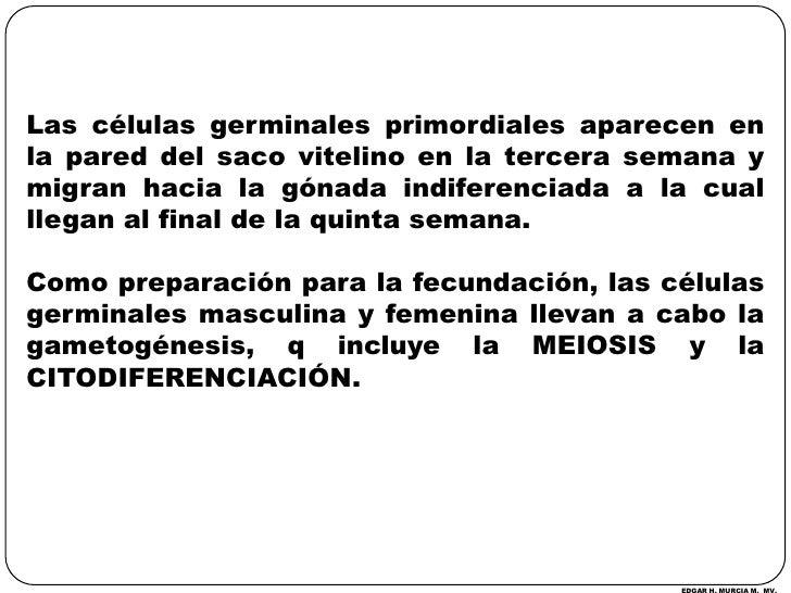 Las células germinales primordiales aparecen en la pared del saco vitelino en la tercera semana y migran hacia la gónada i...