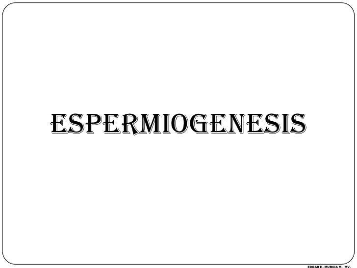 ESPERMIOGENESIS<br />EDGAR H. MURCIA M.  MV.<br />