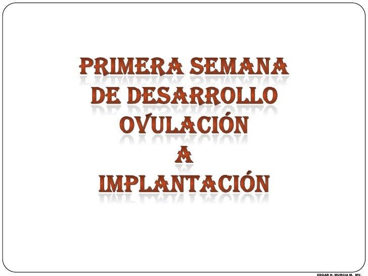 PRIMERA SEMANA <br />DE DESARROLLO<br />OVULACIÓN <br />A <br />IMPLANTACIÓN<br />EDGAR H. MURCIA M.  MV.<br />