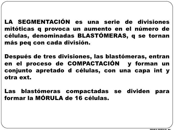 LA SEGMENTACIÓN es una serie de divisiones mitóticas q provoca un aumento en el número de células, denominadas BLASTÓMERAS...