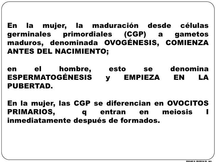 En la mujer, la maduración desde células germinales primordiales (CGP) a gametos maduros, denominada OVOGÉNESIS, COMIENZA ...