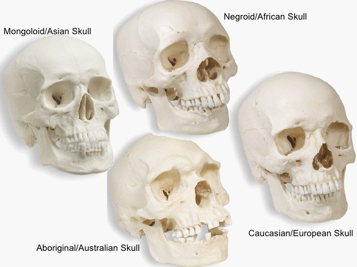 Replica Human Male Skull Set African, Asian, and European