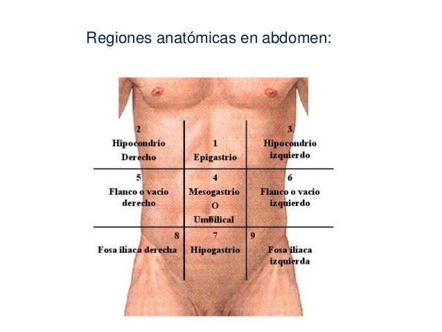 1 fundamentos de anatomía