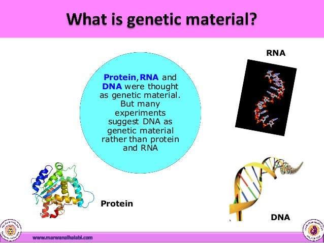 an analysis of mutation in the genetic material of a cell Dna and mutations by the understanding evolution team a mutation is a change  in dna, the hereditary material of life an organism's dna affects how it looks,.