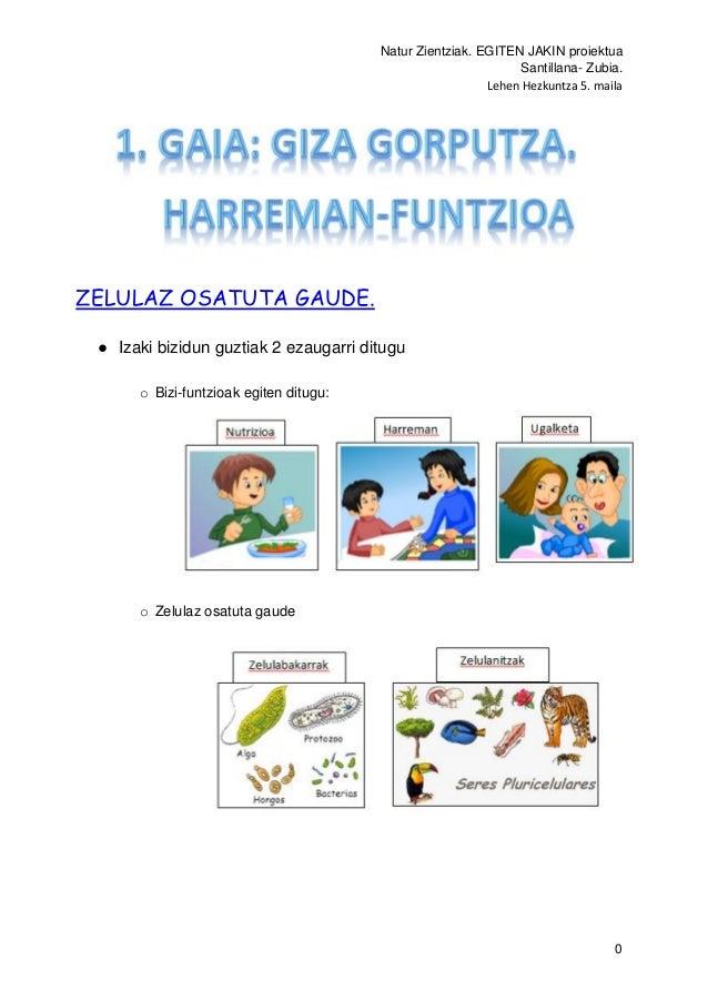 Natur Zientziak. EGITEN JAKIN proiektua Santillana- Zubia. Lehen Hezkuntza 5. maila 0 ZELULAZ OSATUTA GAUDE. ● Izaki bizid...
