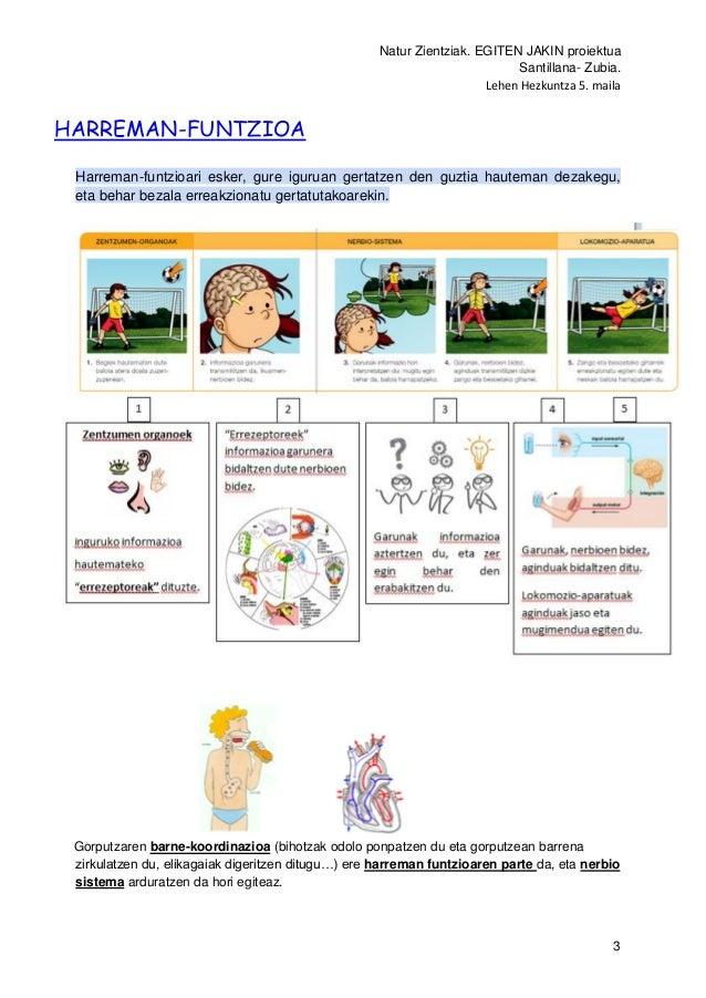 Natur Zientziak. EGITEN JAKIN proiektua Santillana- Zubia. Lehen Hezkuntza 5. maila 3 HARREMAN-FUNTZIOA Harreman-funtzioar...